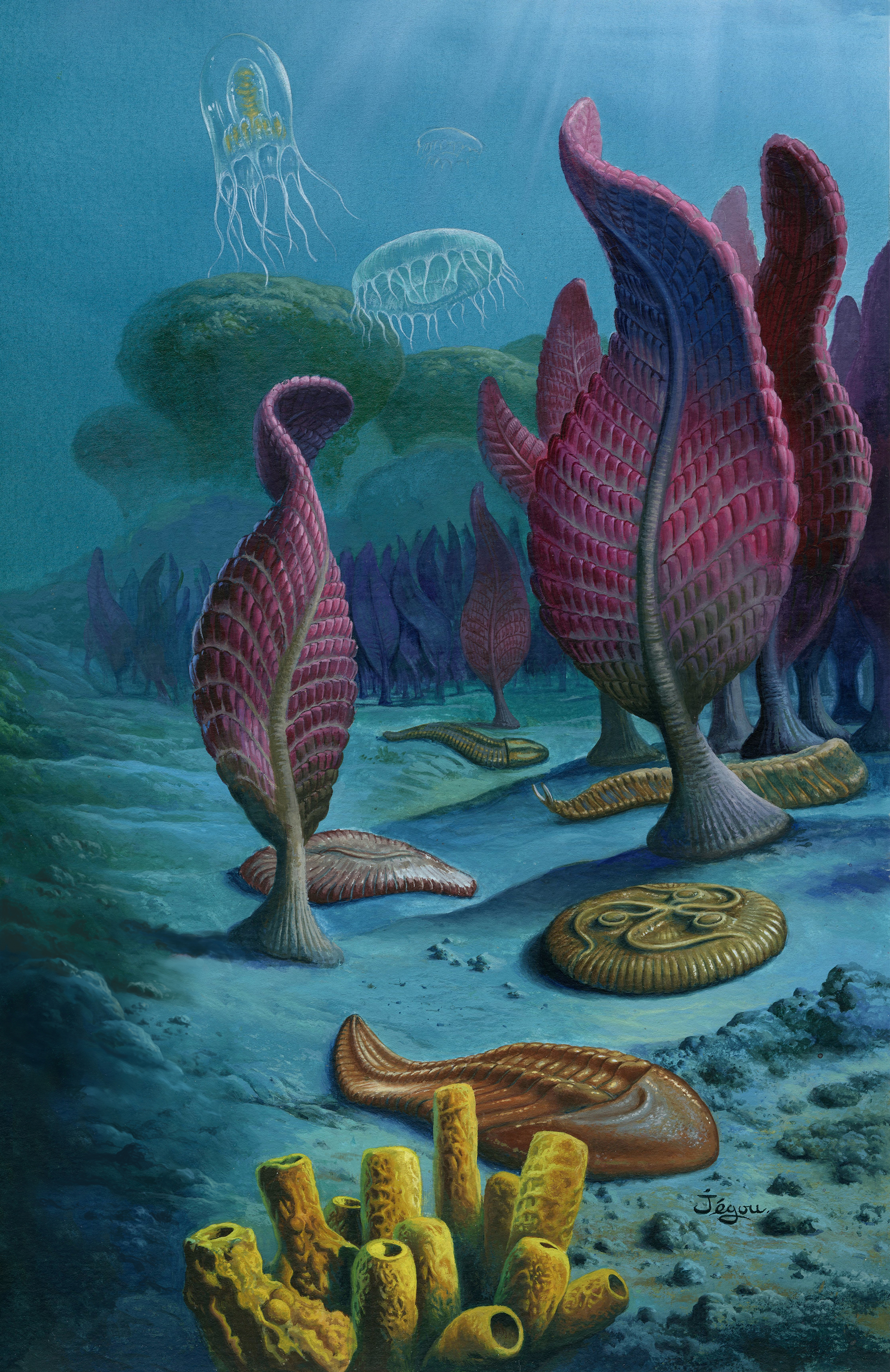 Ediacaran animals were soft bodied and often sessile. Image: Christian Jegou.