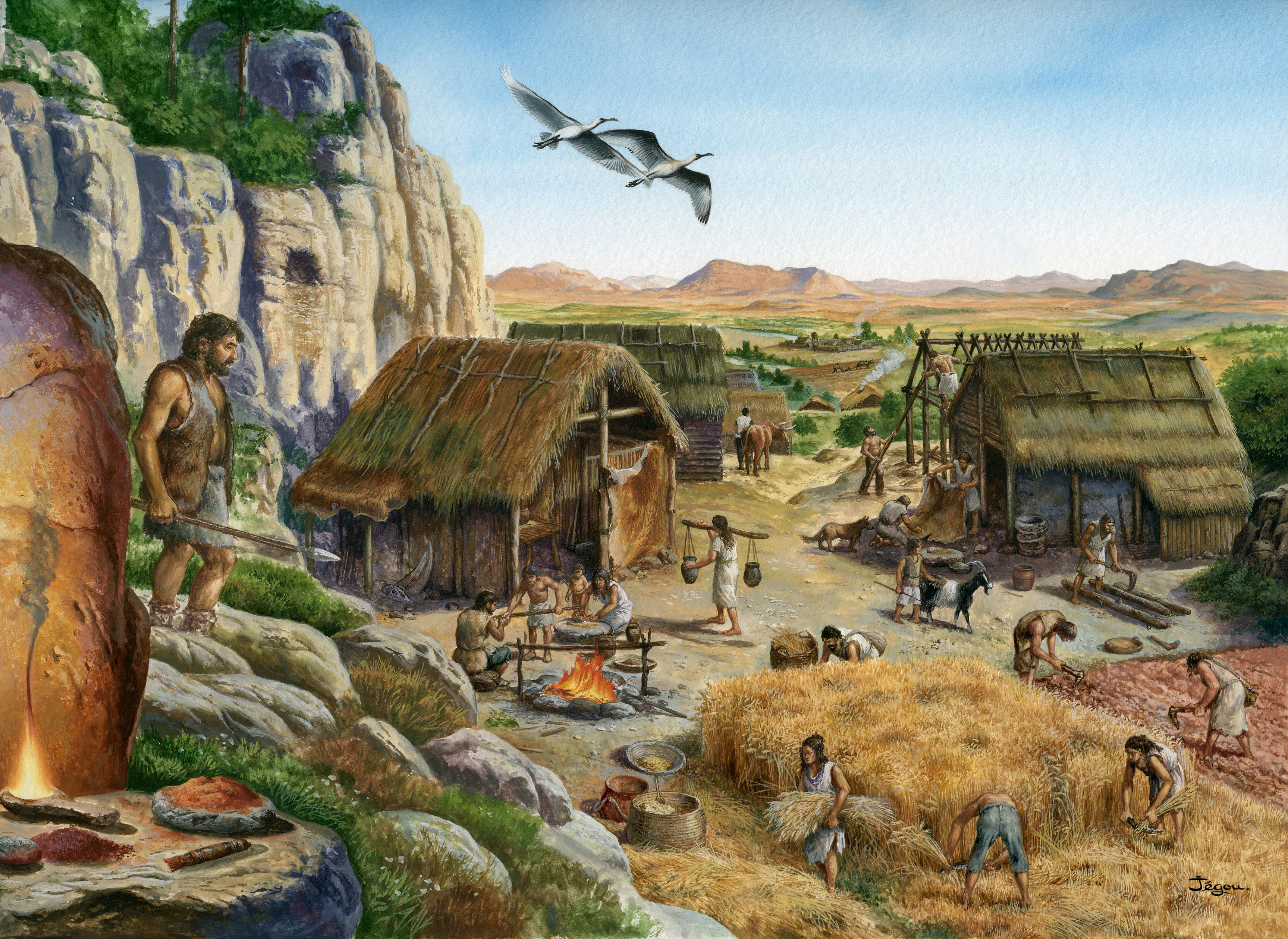 Agriculture and animal husbandry started in the Near East region at about 12 000 years ago. Image: Christian Jegou.