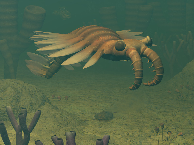 Anomalocaris was one meter long giant predator of its own time. Image: Walter Myers.