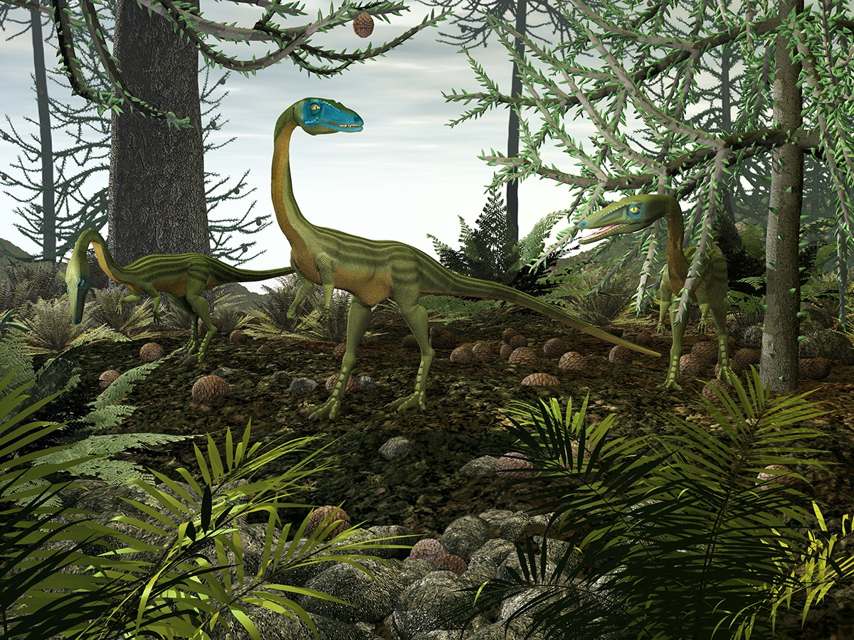 Coelophysis was an early dinosaur from Triassic period.