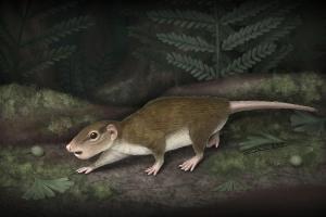 Rugosodon eurasiaticus, an early mammal