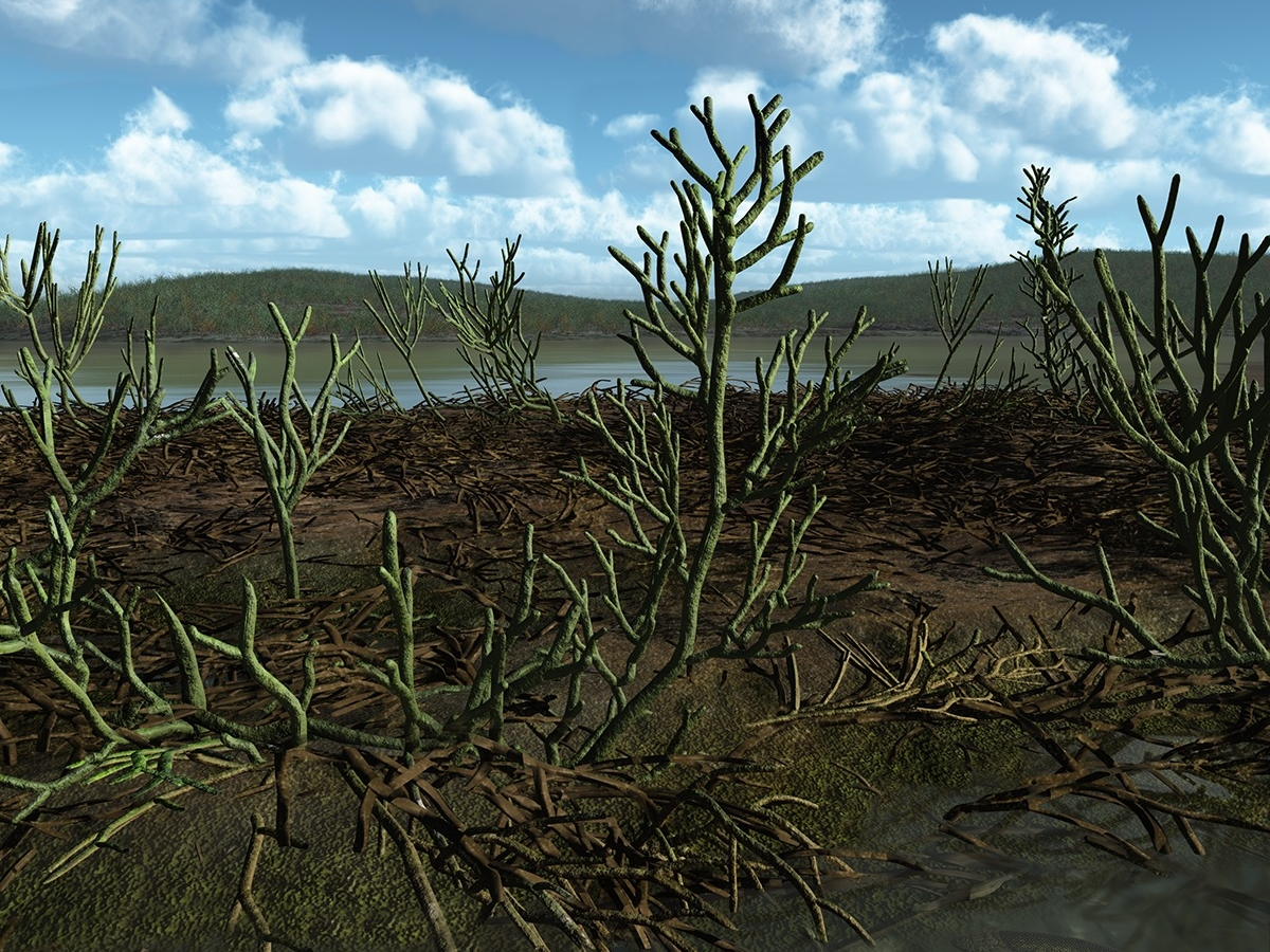 Early vascular plants from genus Gosslingia. Image: Walter Myers.
