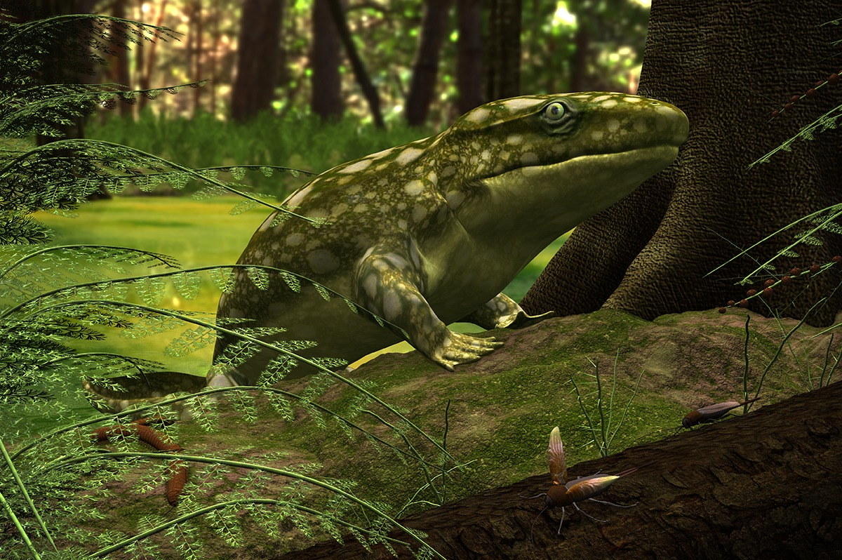 Early amphibian, Ichthyostega. First tetrapods evolved from fish with stalked fins. Image: Walter Myers.