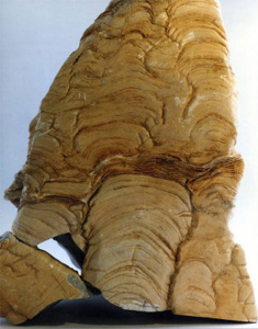 Stromatolite from Tervola. Image: Geologia.fi.